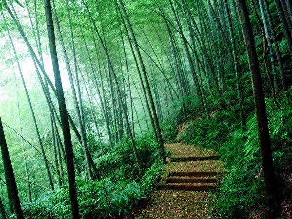 bambukläder ej ekologiska